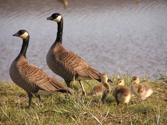 It's All About the Geese, Not the Eggs - Passive Income Assets