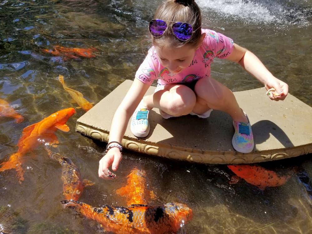 Faith feeding the koi fish in Valle Escondido in Boquete, Paname