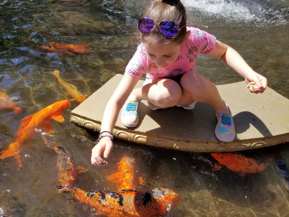 Faith feeding the Koi fish