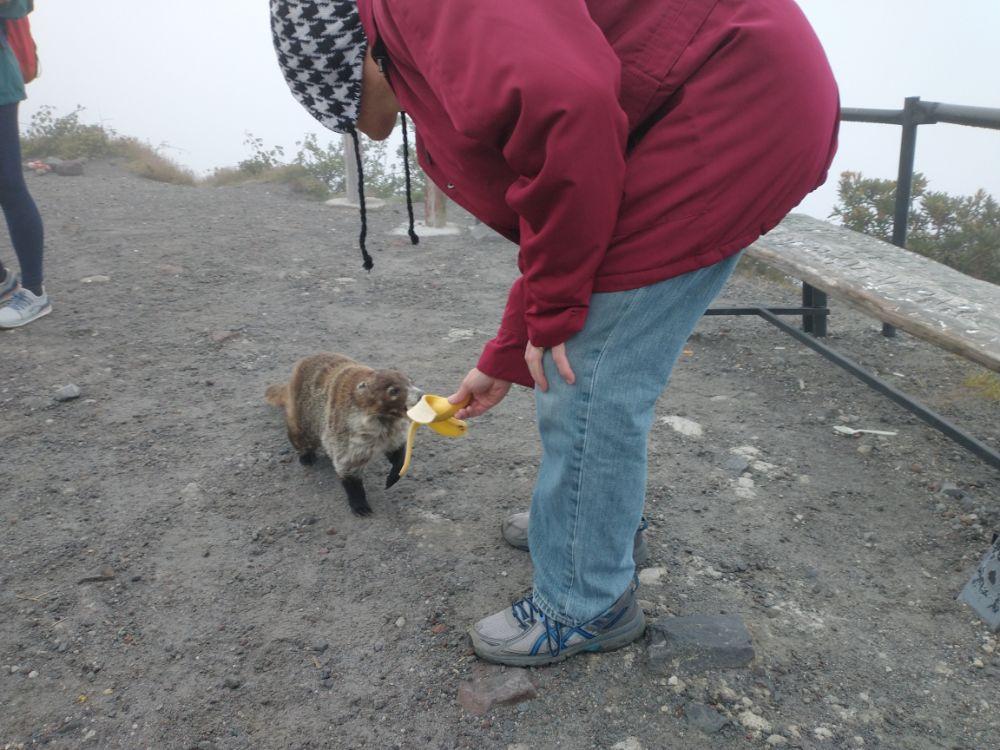 Jim feeding a coatimundi